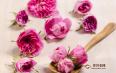 喝玫瑰花茶能淡化雀斑吗?玫瑰花茶的功效