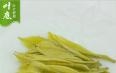 安吉黄金芽是白茶吗