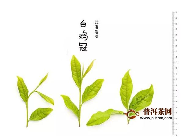 武夷山茶是红茶吗