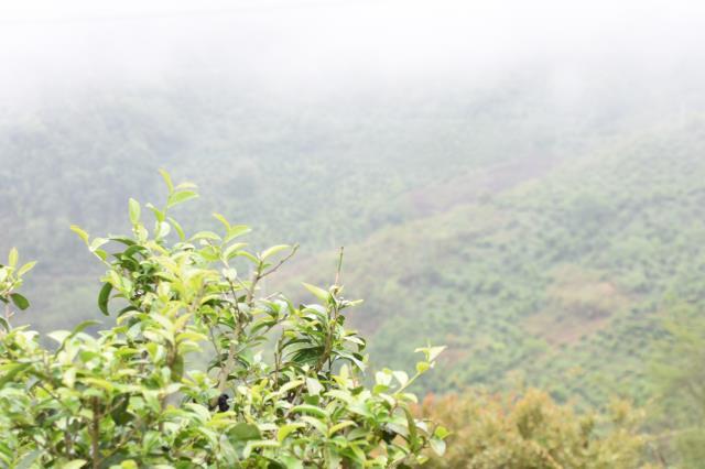 西双版纳:净化普洱茶市场乱象,守护普洱茶闪亮名片