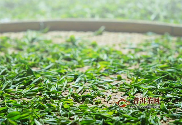 白茶的生产工艺