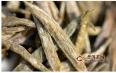 就品质特征来说,君山银针是绿茶吗?