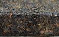 黑茶有一万多一斤的吗?优质黑茶的特征