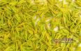 黄茶是绿茶吗?黄茶和绿茶有什么区别?