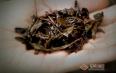安化黑茶味道喝不惯,安化黑茶的口感