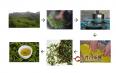君山银针是绿茶还是黄茶