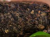 华莱黑茶能治病吗?华莱健黑茶的营养成分