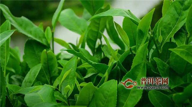 太平猴魁和黄山毛峰都是安徽省的特产绿茶