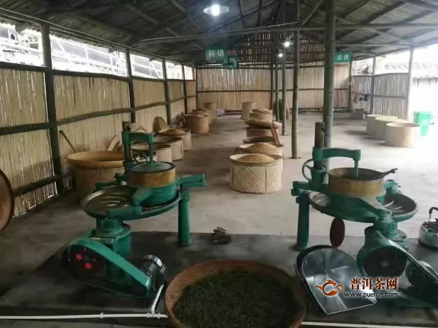 凤凰水仙茶加工工序