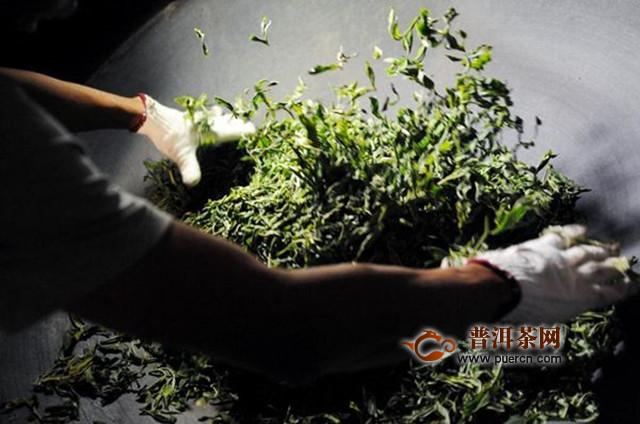 滇青茶采制工艺