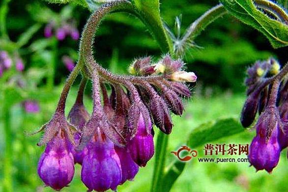 中药紫草的功效与作用