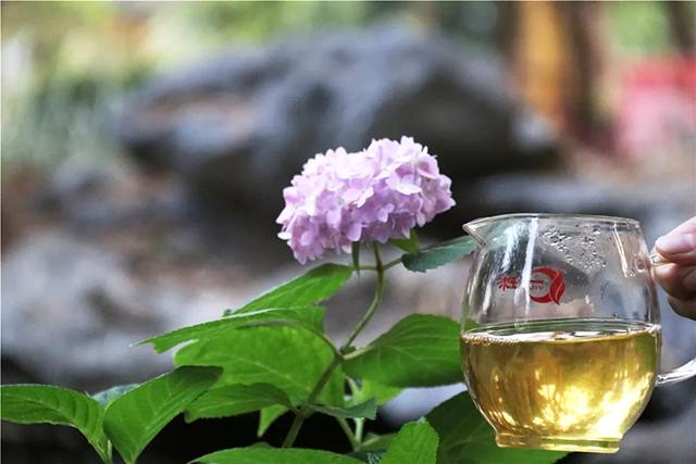 一球茶业:你所喝的茶,代表了你的品位