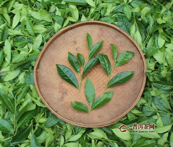 大岩水仙是水仙的品种吗?