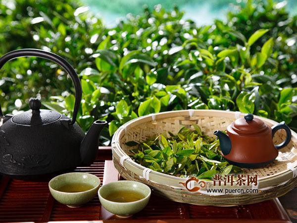女性喝黄茶好吗?