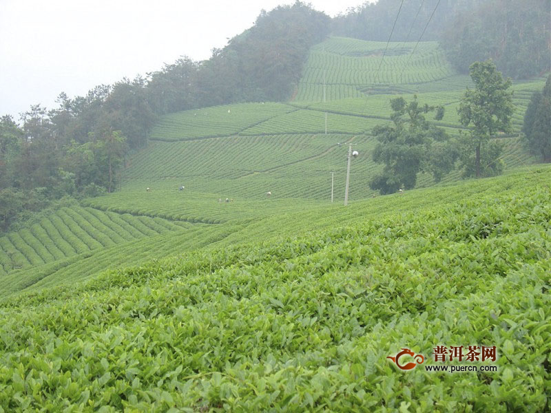 茅山青峰茶产地及特点