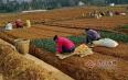 湄潭国家区域性(茶叶)良种繁育基地 ——助力贵州茶产业发展
