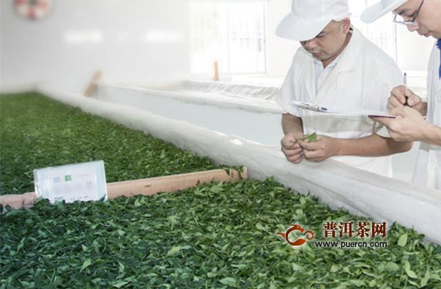 坦洋工夫红茶的制造流程