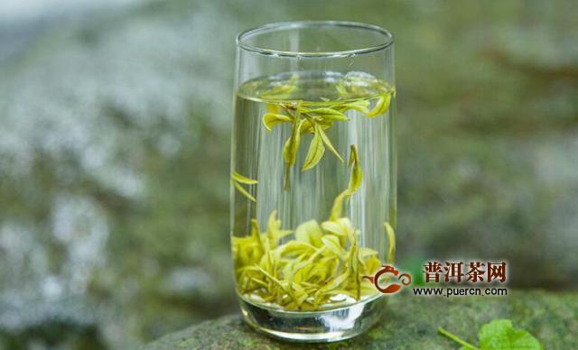 安吉白茶的泡制方法