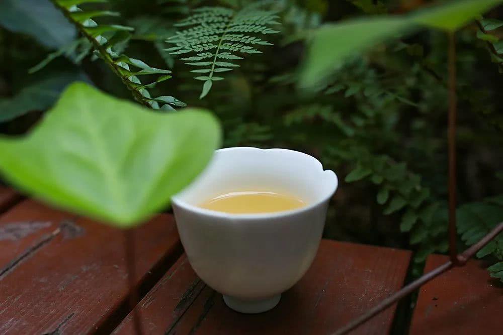 昆明国茶港招商