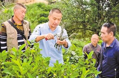 勐海县政协副主席钱胜华的扶贫初心和茶人情怀