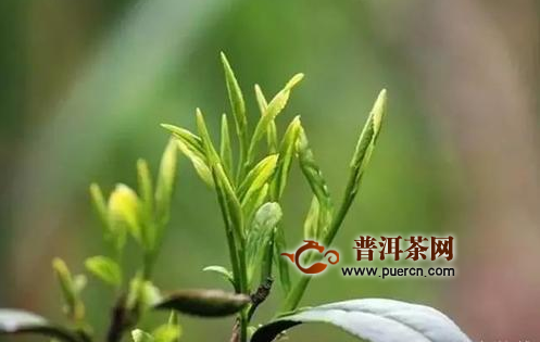 杜国楹:用现代方式做茶 打造百亿千亿公司