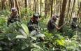 省州督察组实地调查核实毁林种茶现场督促整改