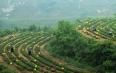 高建华:还原茶作为一片叶子的本质