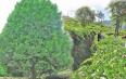 """南涧茶叶产业正向着""""三产融合、多业叠加""""的良好态势发展"""