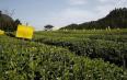 科技兴业 创新引领黑茶产业快速发展