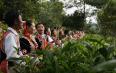 柏联普洱茶庄园:产业扶贫带动茶农增收