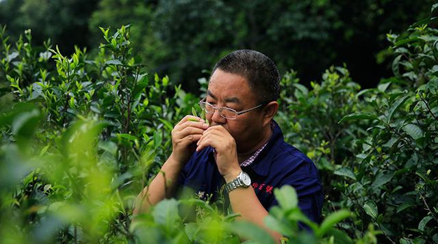 亚太访谈|中吉号杨世华:以茶为媒,助推东方文化复兴