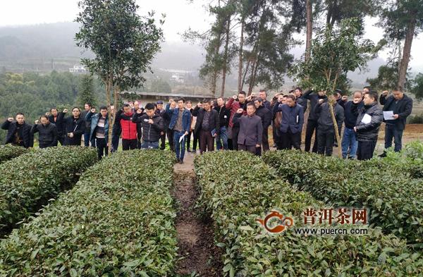 蜂岩:茶农宣誓保茶叶质量安全