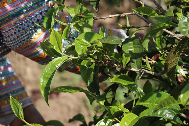 茶行业标准化建设演化史