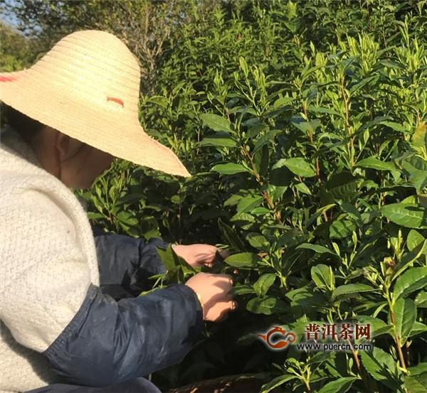 黄山毛峰的茶俗文化