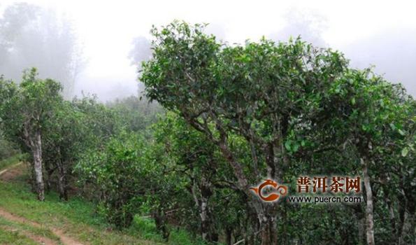 宋代茶叶主产区:巴蜀地区
