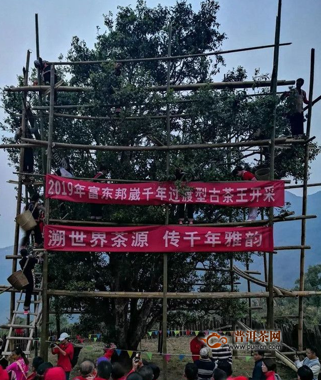 【年度新闻】2019年最热门普洱春茶新闻大盘点(上)