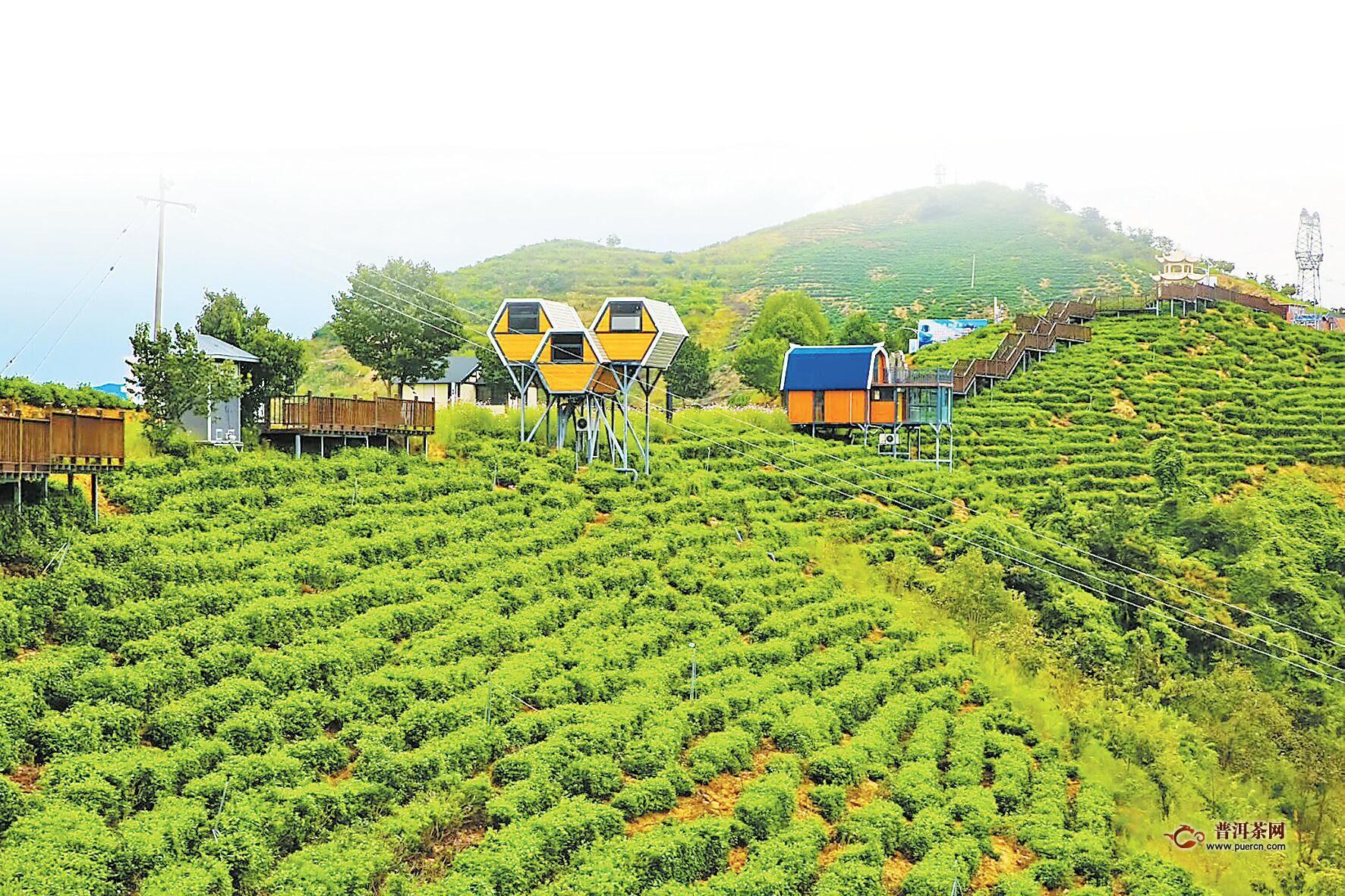 大数据助力精准帮扶 一片茶叶扶起一个产业