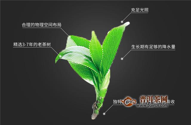 绿茶哪个好?中国十大名茶之一黄山毛峰