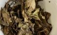 白牡丹属于发酵茶吗