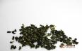 什么铁观音茶叶最好喝