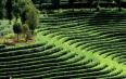 推动皖南山区茶产业融合发展——访省政协委员王昶