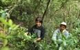 湖北巴东:荒山野茶圆村民脱贫梦