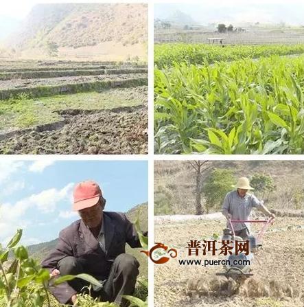 """福贡县各茶叶生产区老百姓抗""""疫""""春播两不误"""