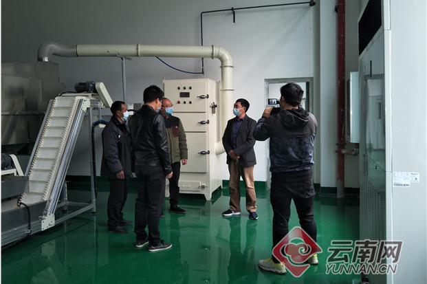"""凤庆县:防疫与产业""""两手抓"""" 新春茶农有盼头"""