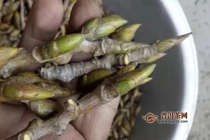 打着作茶叶的幌子,在农村1斤3块钱收购杨树芽,为啥现在消失了