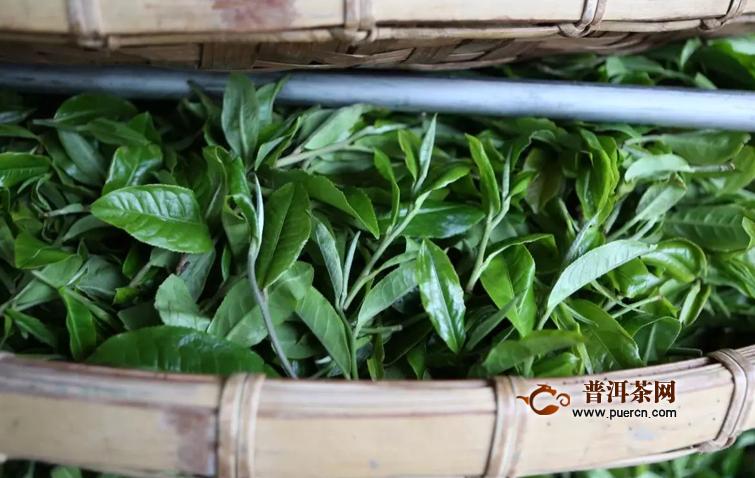 今年巴达山普洱春茶多少钱