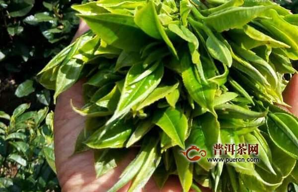 云南勐库茶区古树茶2020年价格多少钱