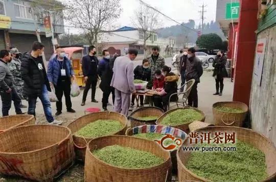"""春茶上市,外地茶商凭""""茶商证""""采购春茶"""