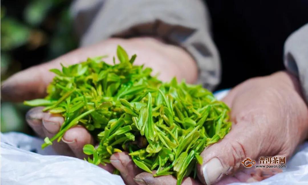2020日照绿茶春茶价格行情预测解答