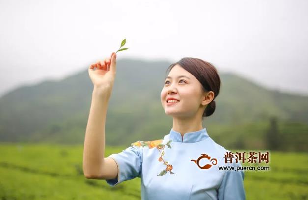 福建白茶功效,春天喝白茶提高免疫力!